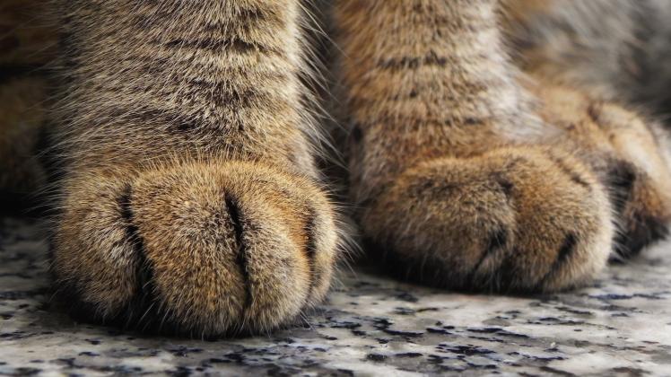 cat-73979