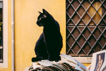 Black cat in Italy