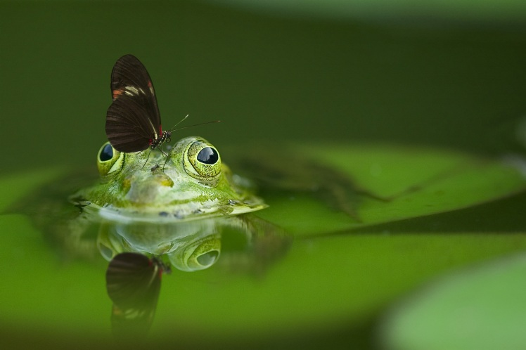 frog-butterfly-pond-reflection-by-frank-winkler